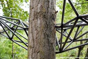 El nido de Grado de pico FASE1 web 272017