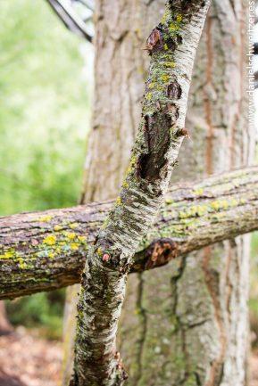 El nido de Grado de pico FASE1 web 302017